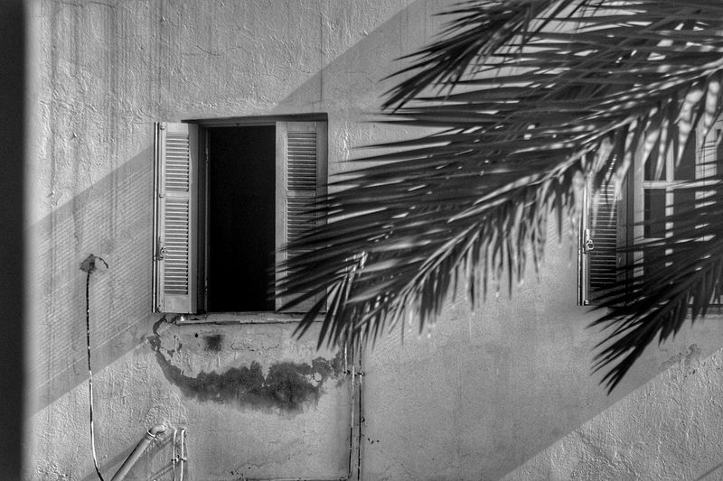 Black And White Light And Shadow Openwindow Window No People Tunisia Djerba  Palm Tree Window Architecture Close-up Building Exterior Built Structure Shutter Window Box Residential Structure House Palm Leaf Exterior Building Residential Building
