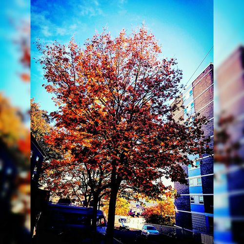 Autumn & Architecture🍁🍂💙 Adapted To The City Autumn Autumn Colors Blue Sky High Rise Buildings Day Cityscape Beauty In Nature Freshness No People Outdoors Nature Motor Vehicles City And Nature Together Autumn2016 Artistic Photography Cityscape Building Exterior City View  Vivid Colous Mobile Photography Bristol, England EyeEm New Here
