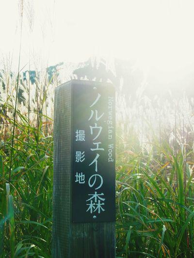 村上春樹 砥峰高原 Japan Haruki Murakami