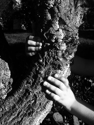 Kids & Trees
