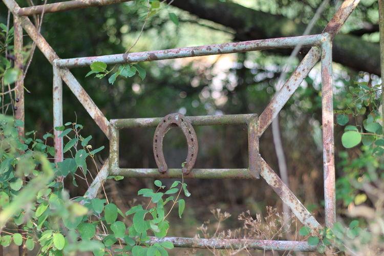 Horse Shoe Tree Close-up Plant Fence