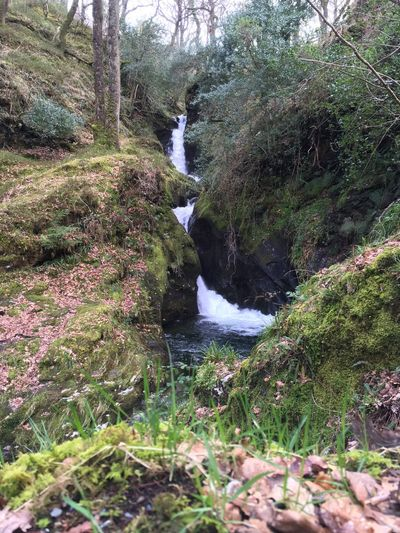Poulanass Waterfall, Glendalough- Ireland 🇮🇪 2019 Waterfall Ireland Glendalough IPhoneography Plant Water Tree Beauty In Nature Nature Growth Day Flowing Water Rock - Object Solid Rock Motion Tranquility Sunlight Non-urban Scene Scenics - Nature No People Forest Land Outdoors