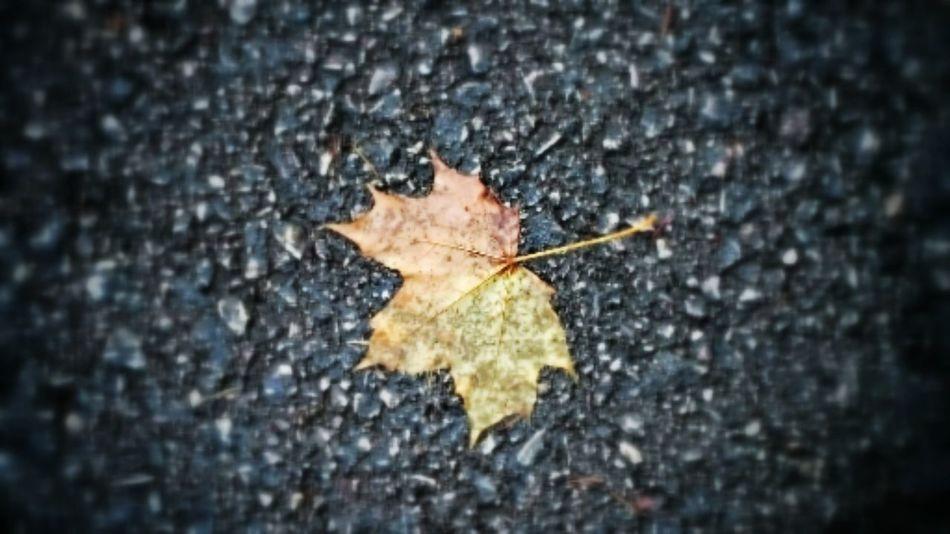 Autumn Leaf Colors Of Autumn Path