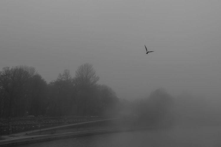 Silhouette of bird flying over trees against sky