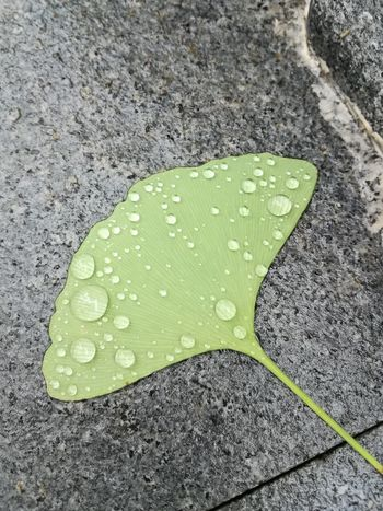 Rain Leaf High Angle View Wet Drop Close-up Green Color