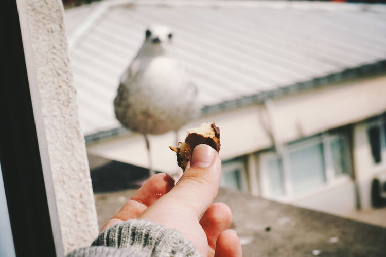 Cropped hand with cake reaching towards bird on window