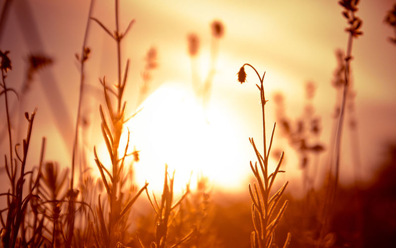 Morning greetings Warm light of morning light brings peace and color to you. Plant Growth Tranquility Field Nature Focus On Foreground No People Close-up Sunlight Tranquil Scene Scenics - Nature Outdoors Bright Cloud - Sky Crop  Stalk Sun Beauty In Nature
