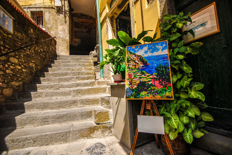 Riomaggiore - Cinqueterre, Italy Alley Architecture Colours Day Door EyeEm Gallery Flower Flowers No People Outdoors Painting Plant Plants Rungs Small Steps Staircase Village