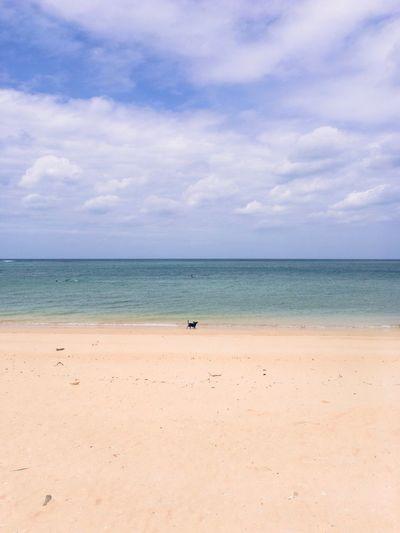 ビーチに、わんこ発見。 Dog Beach Sea Sky Sand Horizon Over Water Scenics Nature Beauty In Nature Tranquil Scene Tranquility Outdoors Landscape Faces Of Summer From My Point Of View The Week On EyeEm Been There. Done That. EyeEmNewHere EyeEm Nature Lover Lost In The Landscape Beachphotography Shore EyeEm Gallery Animal Themes