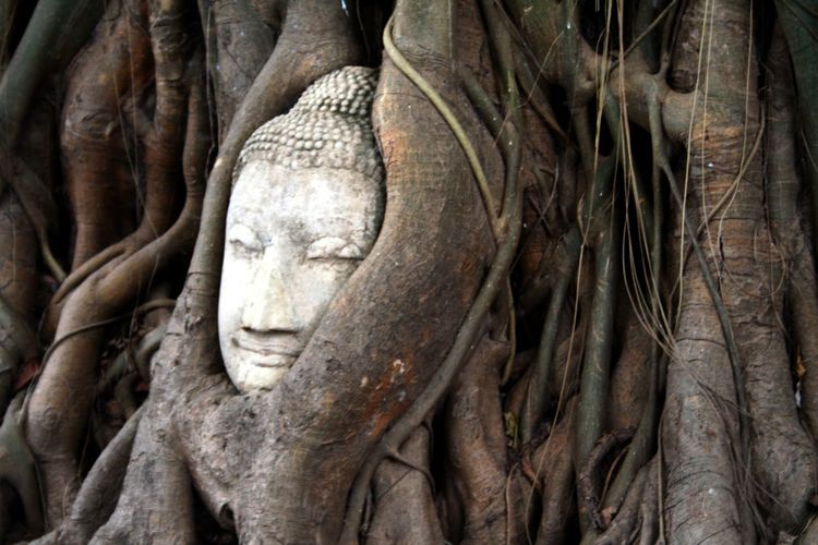 Close-Up Of Buddha Head In Tree Root