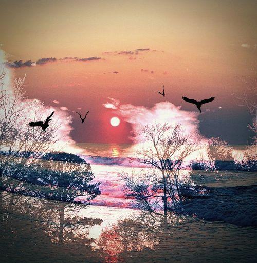 Sunset.. Flying
