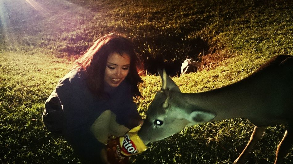 Amazing experience , this spike loved chilli cheese fritos lol Feeding Deers Fritos Deer Moments <3