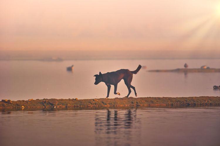 Morning walk of a dog at lakeside