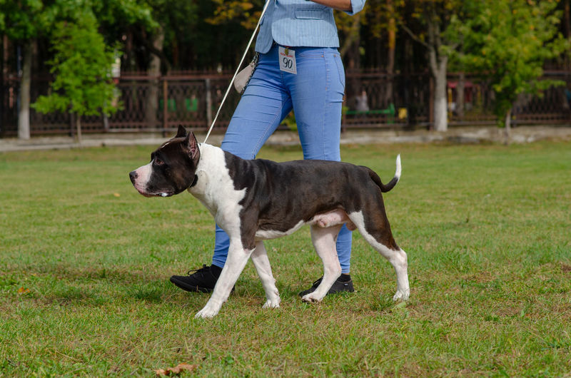 Homel / Belarus - 09.16.2018: People and dogs in the park Body Part Canine Day Dog Domestic Domestic Animals Grass Human Body Part Human Leg Human Limb Jeans Low Section Mammal Nature One Animal One Person Outdoors Pet Owner Pets Plant Standing