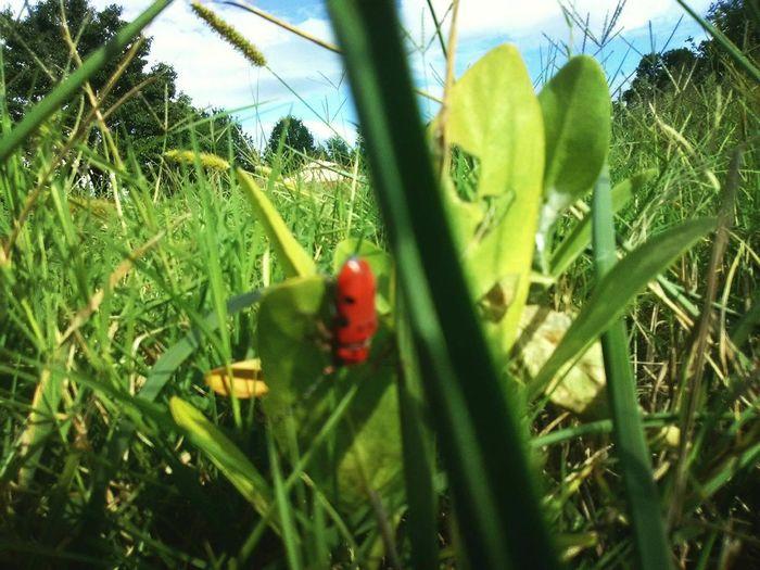 Close-up of ladybug on grass