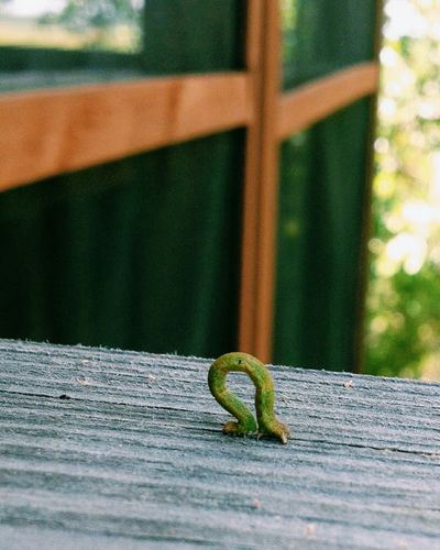 Wildlife Animals In The Wild One Animal Animal Themes Insect Focus On Foreground Green Color Zoology Mellow Plank Crawling Bug No People Gecko Inchworm Green Calm Playful Patio Cute