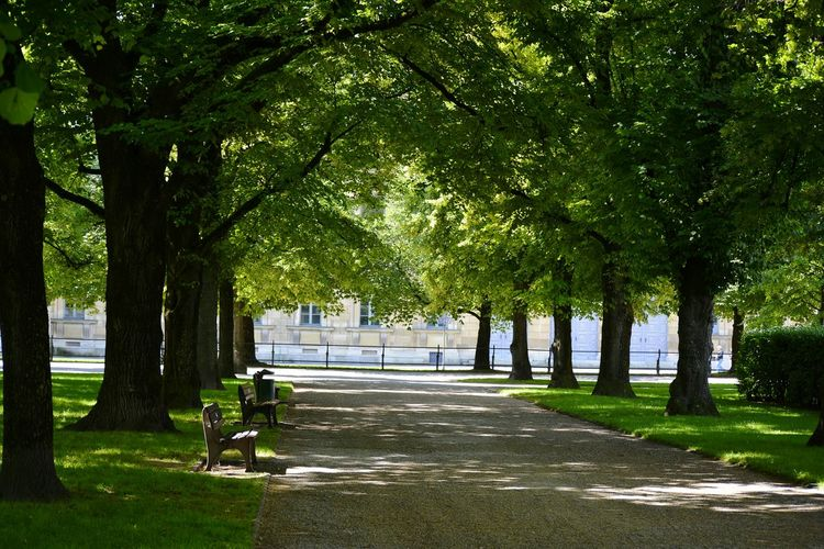 Empty footpath amidst trees in park