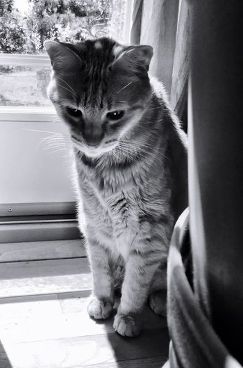 Cat Looking Down While Sitting By Window