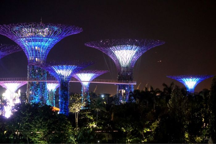 Night Illuminated Celebration Arts Culture And Entertainment Long Exposure Event Low Angle View Tree Outdoors Firework Display Built Structure Architecture Firework No People City Sky