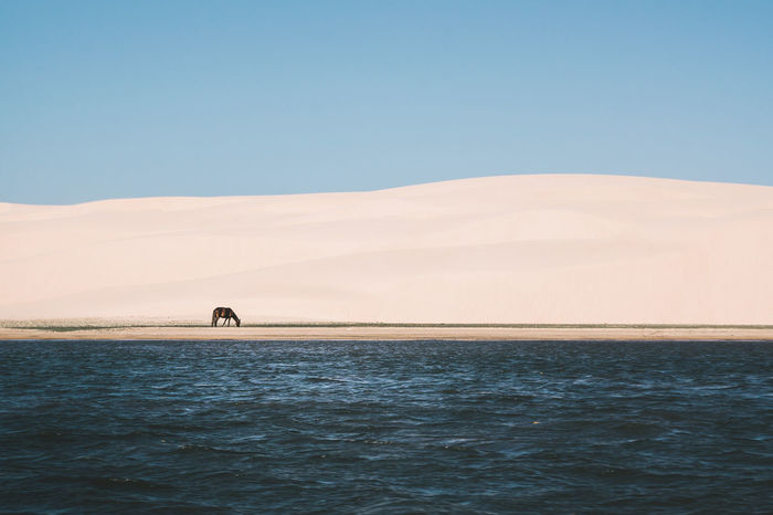Captured this moment while I was on a boat. Animals In The Wild Beach Beachphotography Clear Sky Dunes Horse Minimalism Ocean Sand Sand & Sea Sand Dune Scenics Sea Sea And Sky Seascape Shapes Shapes And Forms Shore Simple Stripes Pattern Tranquil Scene Tranquility Water Wave Pattern Waves The Great Outdoors - 2017 EyeEm Awards The Photojournalist - 2017 EyeEm Awards EyeEmNewHere Sommergefühle EyeEm Selects Lost In The Landscape Connected By Travel