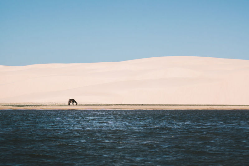 Captured this moment while I was on a boat. Animals In The Wild Beach Beachphotography Clear Sky Dunes Horse Minimalism Ocean Sand Sand & Sea Sand Dune Scenics Sea Sea And Sky Seascape Shapes Shapes And Forms Shore Simple Stripes Pattern Tranquil Scene Tranquility Water Wave Pattern Waves The Great Outdoors - 2017 EyeEm Awards The Photojournalist - 2017 EyeEm Awards EyeEmNewHere Sommergefühle EyeEm Selects Lost In The Landscape Connected By Travel Visual Creativity This Is Latin America The Great Outdoors - 2018 EyeEm Awards