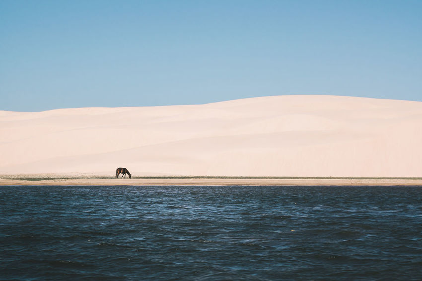 Captured this moment while I was on a boat. Animals In The Wild Beach Beachphotography Clear Sky Dunes Horse Minimalism Ocean Sand Sand & Sea Sand Dune Scenics Sea Sea And Sky Seascape Shapes Shapes And Forms Shore Simple Stripes Pattern Tranquil Scene Tranquility Water Wave Pattern Waves The Great Outdoors - 2017 EyeEm Awards The Photojournalist - 2017 EyeEm Awards EyeEmNewHere Sommergefühle EyeEm Selects Lost In The Landscape Connected By Travel Visual Creativity This Is Latin America