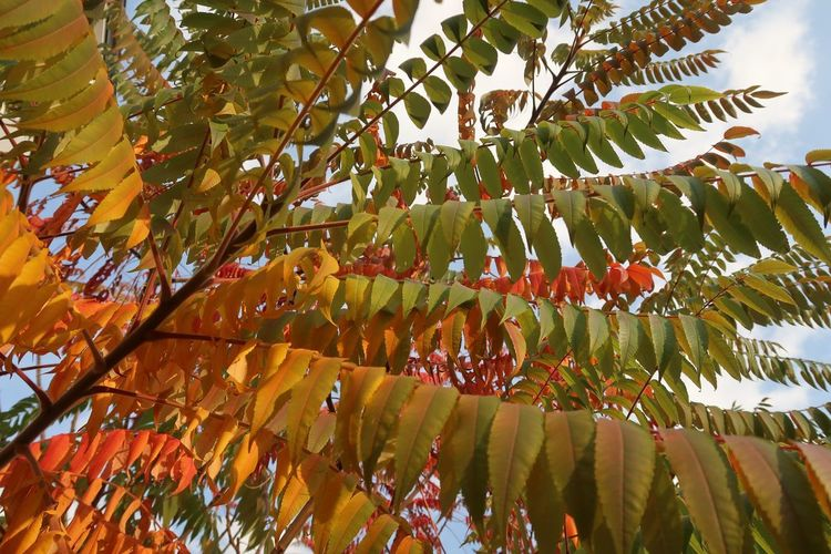 Autumn colors Autumn Growth Tree Plant Low Angle View Beauty In Nature Leaf Plant Part No People Nature Sunlight Tranquility Day Close-up Freshness Branch Outdoors Green Color Sky Autumn Change