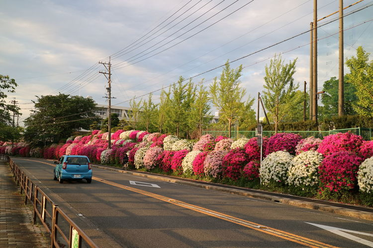 roadside during spring season Flowerbed Beauty Flowerbed Decorations Flowerbeds Tree Technology Telephone Line Multi Colored Electricity  Cable Mountain Electricity Pylon Road Sky Farmland Vehicle Blooming Agricultural Field Industrial Windmill In Bloom My Best Travel Photo EyeEmNewHere