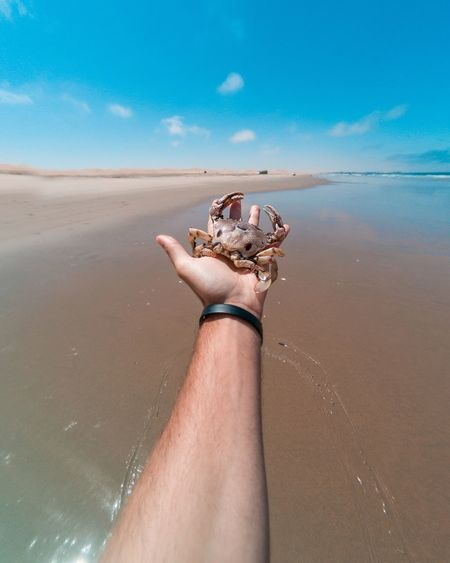 Cropped hand of man holding crab at beach