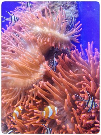 Sea Life Underwater UnderSea Animal Themes No People Water Aquarium Sea Anemone Genoa Through The Window Smartphone Photography Note 2 Nature Aquarium Life Swimming Aquarium Photography Fish Tank Close-up Acquario Di Genova Orange Colour Multi Coloured