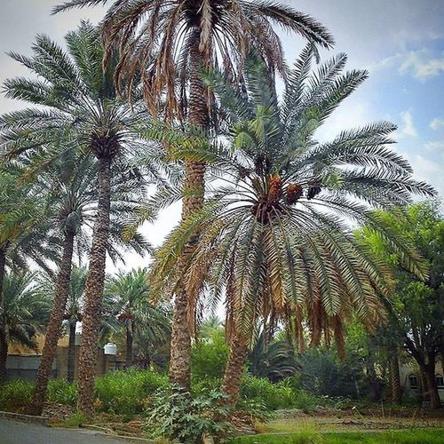 Learn & Shoot: Simplicity Trees Palm Trees
