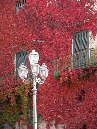 Autumn Colors Sambucadisicilia Building Exterior Red Red Color Colors Leaves_collection Sicily Siculiana Hidden Gems  Colour Of Life