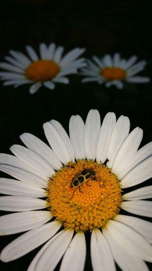 Nos pequenos detalhes Natureza Jardimsecreto Abugslife