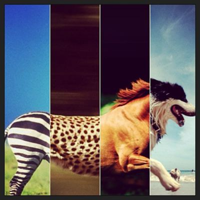 The #Pixplit Zoo brings us some amazing new animals, created by four people :) View it now on Pixplit for iPhone Pixplit
