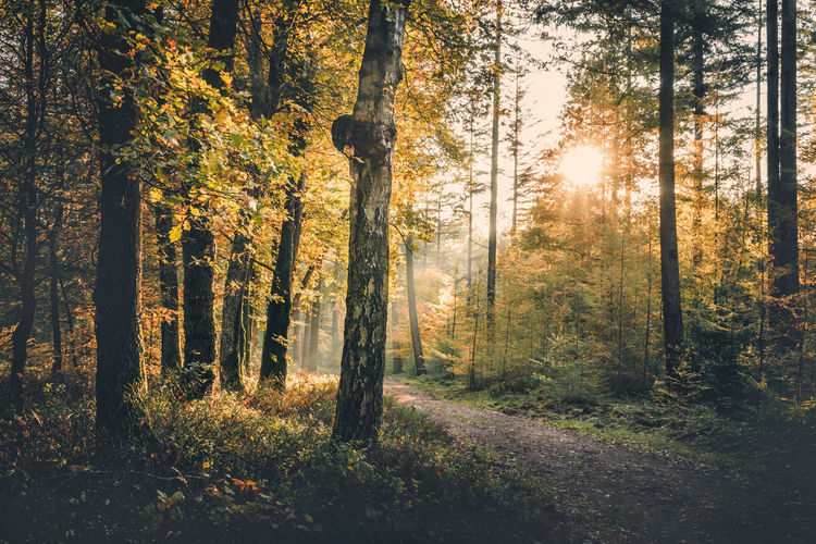Tree Plant Forest Land Tranquility Beauty In Nature Growth Tree Trunk Tranquil Scene Trunk Sunlight Nature No People Non-urban Scene WoodLand Day Scenics - Nature Autumn Landscape Sun Change Outdoors Streaming Speulderbos