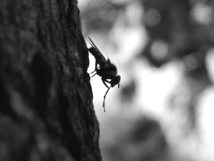 fly two B&w Ipatinga Animals In The Wild Animal Wildlife One Animal Animal Themes Tree Tree Trunk Ant Focus On Foreground Outdoors No People Bat - Animal Beauty In Nature Insect Perching Nature Close-up Mammal African Elephant Bird Day
