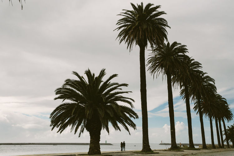 Low angle view of palm trees by sea against sky