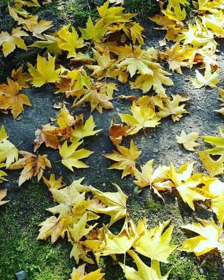 Yellow Nature Day No People Beauty In Nature Tree Love ♥ Baku Azerbaijan