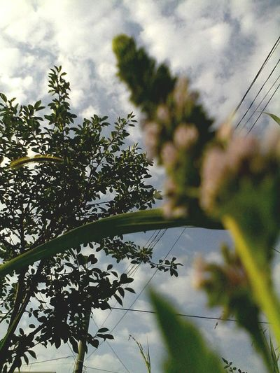 Sky Tree Plant Nature Day Beauty In Nature Cloud - Sky Outdoors Green Cloud No People Cloudscape Eyeem Market Edited By @wolfzuachis Wolfzuachis @wolfzuachis Ionitaveronica Eyeemphoto Showcase: 2016 Nature Looking Up Cable Power Line  On Market Premium EyeEm Selects