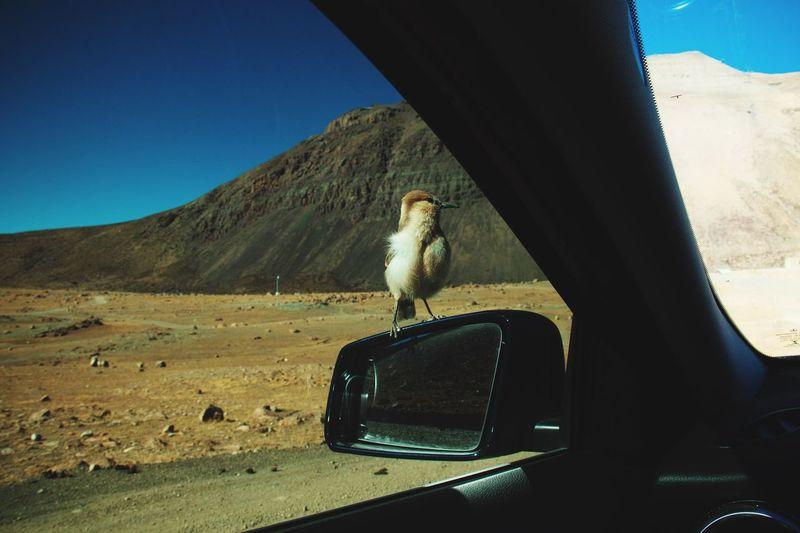 Bird in a car