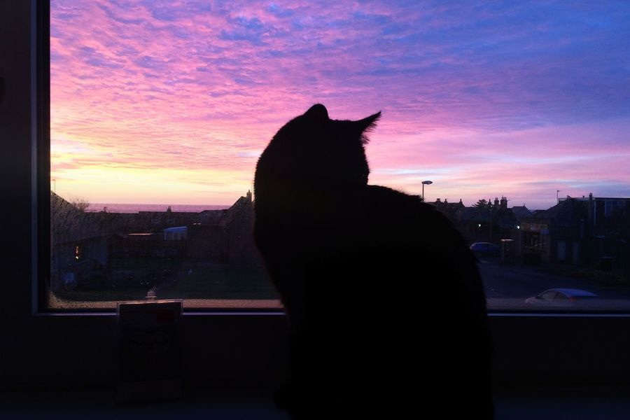 Shadow sitting on the windowsill Aberdeenshire Cruden Bay Scotland Sunset Sheperds Delight Orange Pink Purple Cat Shadow Silhouette EyeEmNewHere