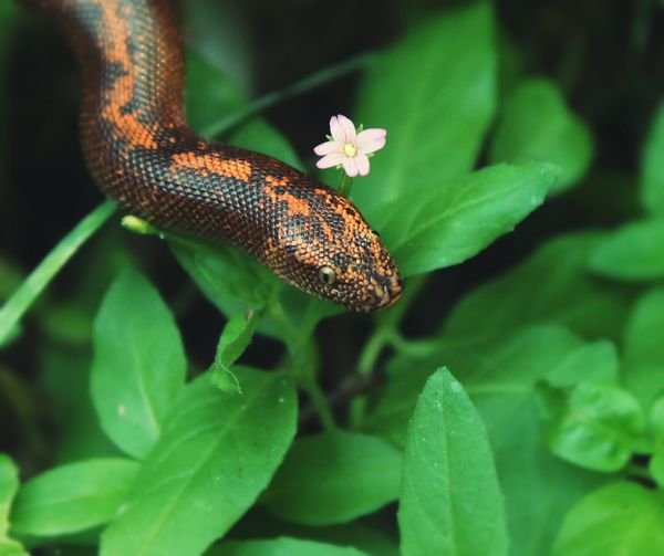 One Animal Animal Wildlife Leaf Close-up Plant Nature Animals In The Wild Animal Themes Outdoors Day No People Multi Colored Flower Full Length Beauty In Nature Snake Green Color Animals🐾 Animal Reptile Snakes Slytherin