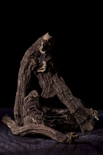 Close-up of driftwood on tree against black background