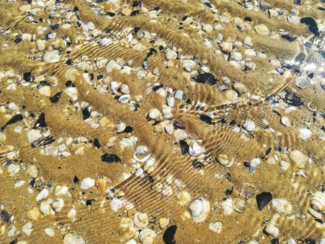 Small Waves Wawes Pebbles Mussels Rippled Surface Low Tide Under Water Sea Water Seashells Backgrounds Beach Full Frame Textured  Sand Pattern Close-up Pebble Beach Shore Rough Sandy Beach Calm