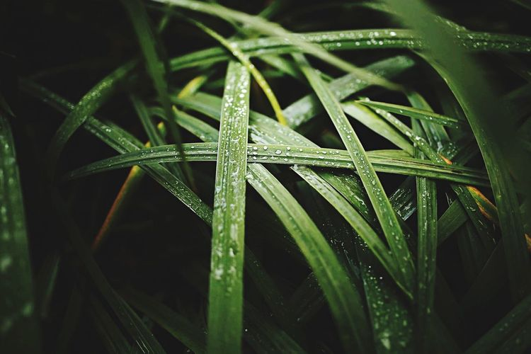 Full frame shot of wet grass