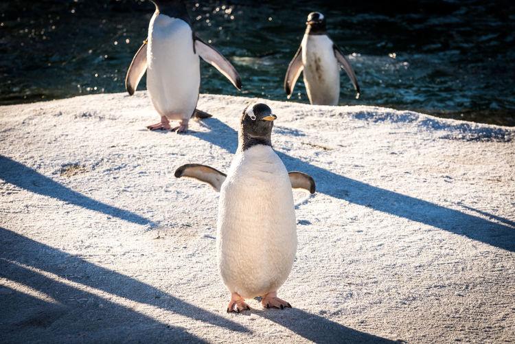 Penguins on rock formation