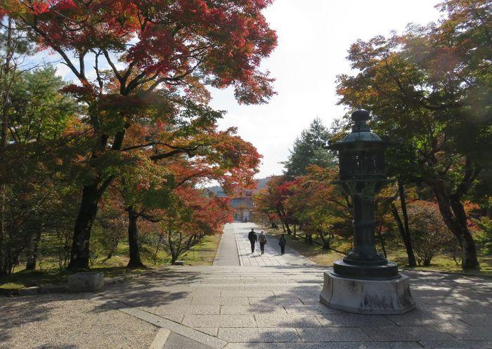 紅葉 ひと 人 後ろ姿 植物 道 木 Autumn Beauty In Nature Branch Day Growth Leaf Nature Outdoors Scenics Sky Tranquility Tree Tranquil Scene