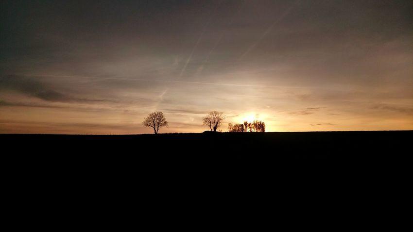 Sunrise Coucher De Soleil Lever De Soleil Tree Sunset Tree Area Rural Scene Silhouette Agriculture Sky Landscape Cloud - Sky