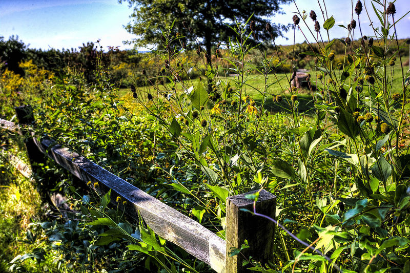 Rural scene Agriculture Beauty In Nature Fencepost Field Grass Green Color Growth Land Landscape Nature Outdoors Plant Rural Scene Scenics - Nature Sunlight Tranquil Scene Tranquility Tree Wooden Fench