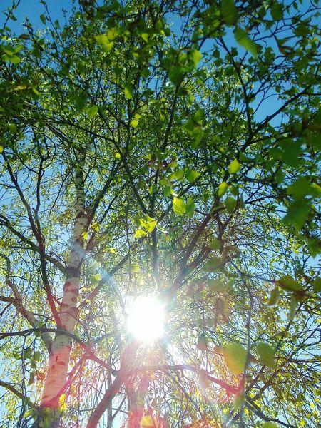 Soleil Arbre Nature Sérénité Il Fait Beau!